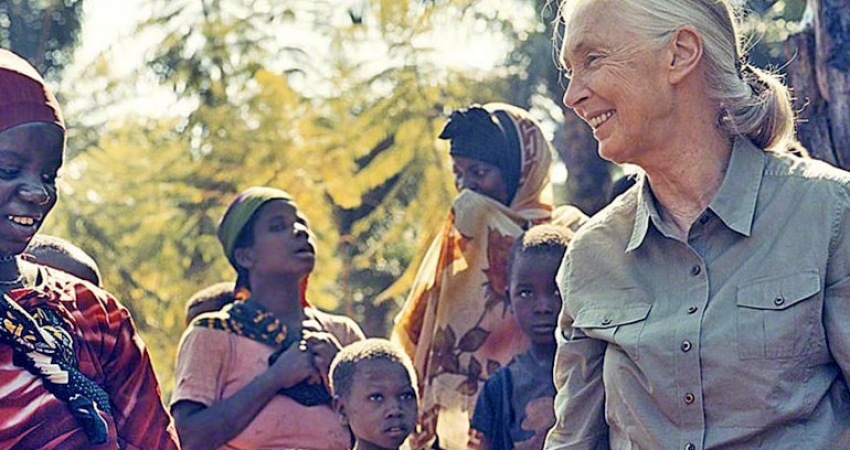500 cellulari usati per The Jane Goodall Institute!